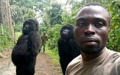 Due gorilla in posa per un selfie con ranger: la foto è virale