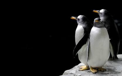 Giornata mondiale dei pinguini: le immagini più belle