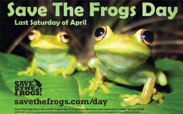 save-the-frogs-day-2019