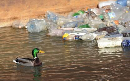 Uccelli migratori, la giornata mondiale contro inquinamento e plastica
