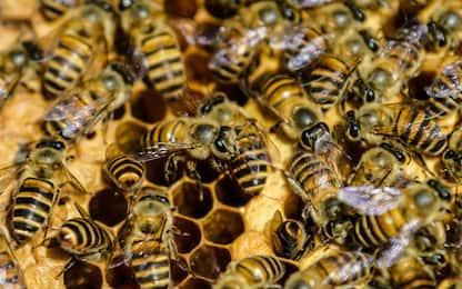 Giornata mondiale delle api: quando e perché è stata istituita