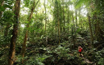 Cambiamento climatico, nuove foreste per ridurre i livelli di CO2