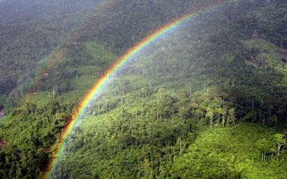 Riscaldamento globale, un aiuto da piante extra-large che assorbono più CO2