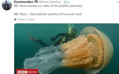 Cornovaglia, avvistata una medusa gigante. VIDEO