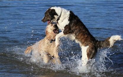 Per i cani le principali fonti di ansia sono i rumori e la paura