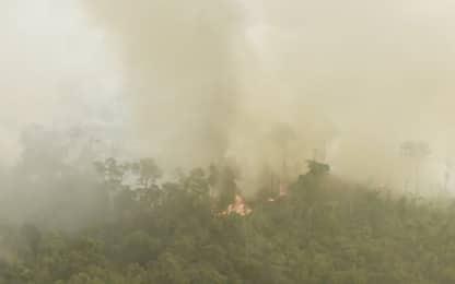 Incendi Amazzonia, nuove immagini dall'alto di Greenpeace. VIDEO