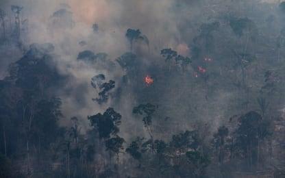 Incendi in Amazzonia, quali sono le cause
