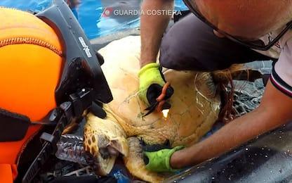 Pantelleria, salvata tartaruga incastrata tra plastica e lenze. VIDEO