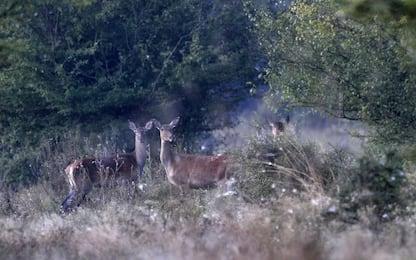 Uccidono cerva e cerbiatto, denunciati due cacciatori a Livigno
