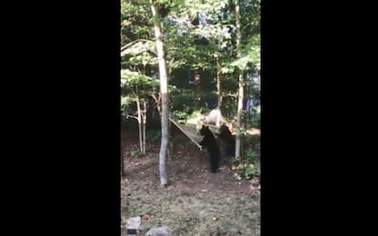 Sorpresa nel giardino di casa: gli orsi giocano con l'amaca. VIDEO