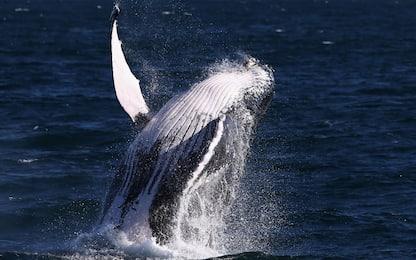 TripAdvisor, stop ai biglietti per attrazioni con balene e delfini