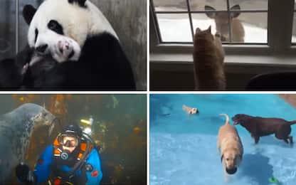 Giornata mondiale degli animali, i VIDEO più belli e divertenti