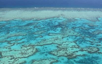 L'IA può monitorare lo stato di salute della barriera corallina