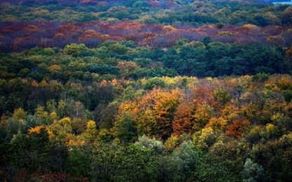 Giornata Nazionale degli alberi: tutte le iniziative in Italia
