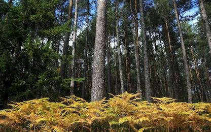 Giornata mondiale degli alberi: come riconoscerne le foglie