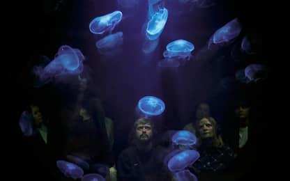 A Londra una mostra immersiva sulle meduse. FOTO