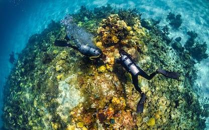 Bahamas, scienziati al lavoro per salvare barriera corallina