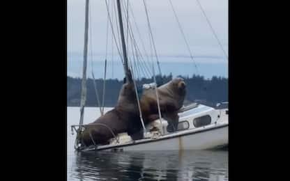 Usa, a Seattle la gita in barca di due leoni marini. VIDEO