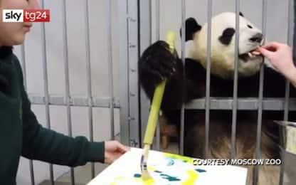 Russia, il panda pittore dello zoo di Mosca. VIDEO