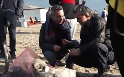 Piero Pelù volontario ripulisce spiaggia Feniglia da plastica. VIDEO