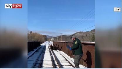 Usa, alce bloccata sui binari nel Vermont: salvata con una gru. VIDEO