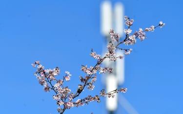 Primavera_Ok