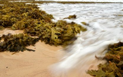 Infradito ecosostenibili: da alghe materiale alternativo alla plastica