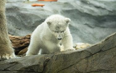 foto-hero-orso-polare-vienna-ansa