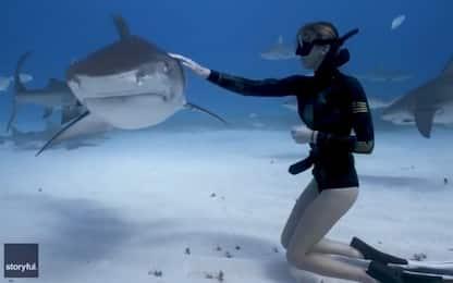 Bahamas, incontro ravvicinato tra sub e squalo tigre. VIDEO