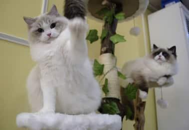 Gatti social, ecco chi sono le star feline più seguite su Instagram