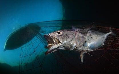 Le migliori foto subacquee dell'anno