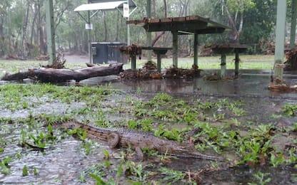 Australia, Rangers a lavoro dopo danni a parco per alluvioni. VIDEO