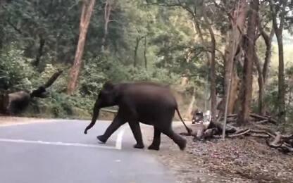 India, incontro ravvicinato con un branco di elefanti. VIDEO