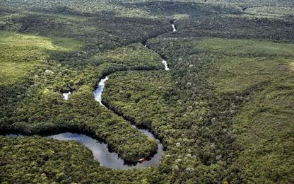 Diecimila anni fa i nostri antenati coltivavano piante in Amazzonia