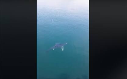 Pozzuoli, avvistato uno squalo nelle acque del golfo. VIDEO