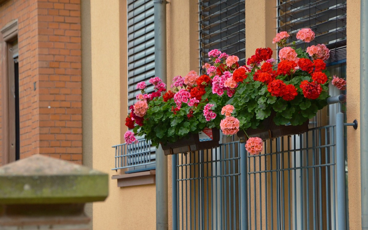 Fiori Da Balcone Ombra piante e fiori da balcone, le più facili da curare. foto