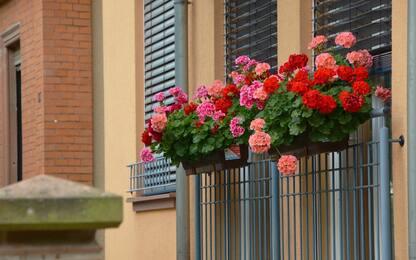 Piante e fiori da balcone, le più facili da curare. FOTO