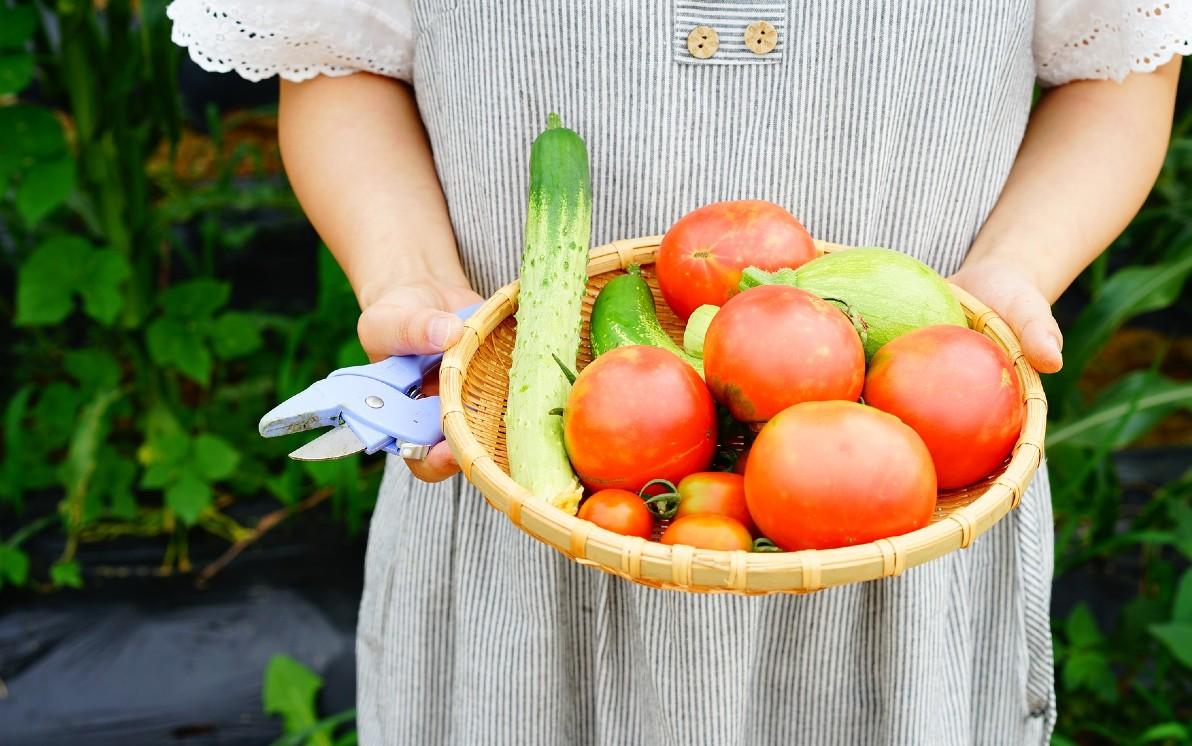 Come Coltivare Pomodori Sul Balcone orto sul balcone: cosa piantare. foto