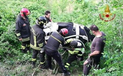Scivola in calanco, mucca salvata da Vvf con elicottero