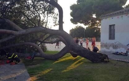 Pino crolla in un parco, bambini feriti