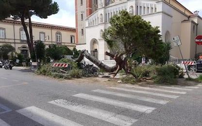 Pino cade in centro Viareggio, no feriti