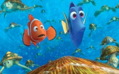 Nemo, alla scoperta delle sue strisce colorate