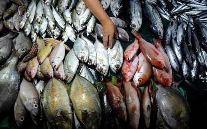 Sequestro di pesce e multe fino a 40mila euro nel Napoletano
