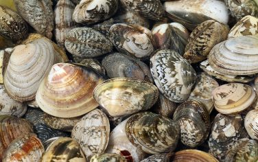 Getty_Images_Vongole
