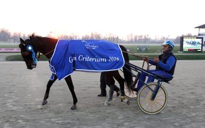 Il cavallo Varenne trasferito in un allevamento del Pavese