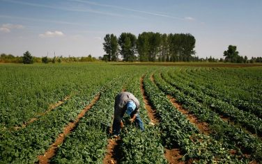 GettyImages-agromafie