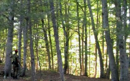 Alberi tagliati illegalmente nel Parco dell'Aspromonte: 6 denunce