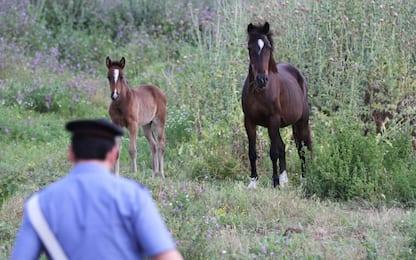 Noto, corsa clandestina di cavalli: otto denunce