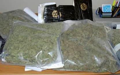Droga, la polizia sequestra 25 chili di marijuana nel Napoletano