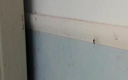 Napoli, invasione di zanzare e tafani all'ospedale San Giovanni Bosco